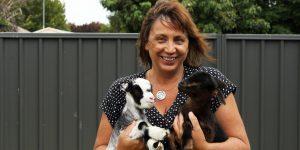 Animals bring calm in wellbeing program